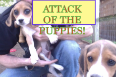 ATTACK OF THE PUPPIES PIC.png