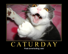 it's caturday.jpg