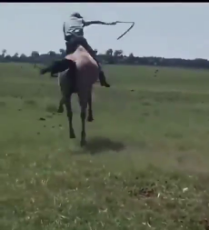 horse spin.mp4