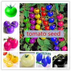 100pcs-bag-rainbow-tomato-seeds-rare-tomato.jpg