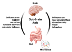 Gut-Brain_Axis_large.png