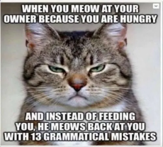 cat-when-you-meow-at-owner-meows-back-grammatical-mistakes.png