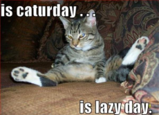 caturday-lazyday.jpg