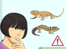 wikihow to catch a lizard.jpg