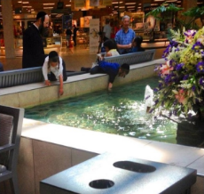 jews stealing money from a fountain.jpg