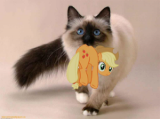 appulkitty.png