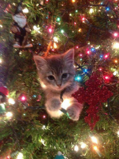 14_Cat_Christmas_Tree_Kitten.jpg