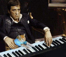 Cocaine_Drugs_Cat_Piano_Scarface_Tony Montana_Friend_Annoyed_Irrigating_Fed up_Sour.gif
