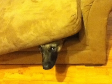 Another-Dog-Hiding-In-a-Couch-Cushion.jpg