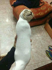 cat in a sock.jpg