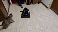 Lazy Kitty Loves Riding Roomba.mp4