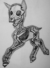 My Little Pony - Skeleton.jpg
