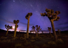 joshua-tree-dark-sky.jpg