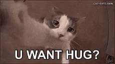 kittehug.mp4