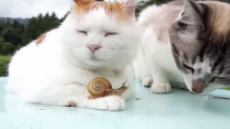 master shiro and snail.webm