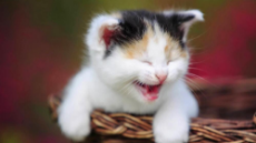 cute-cat-happy-4741.jpg